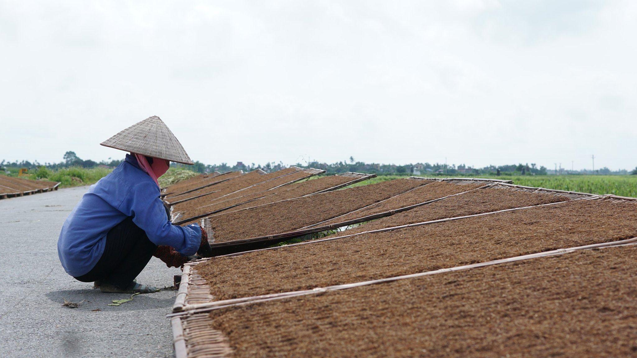 Thuốc Lào Ngon , sản phẩm quê hương tôi